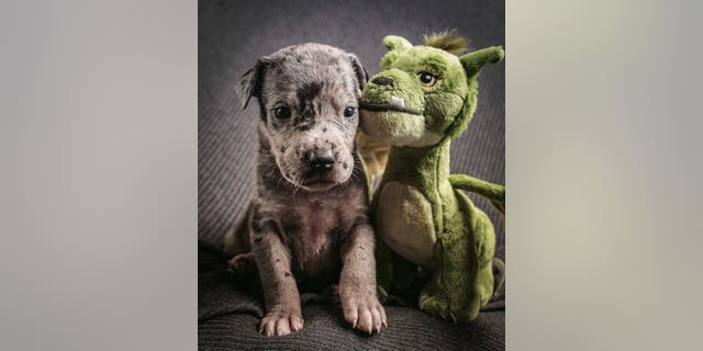 """Elliott was named after a character from the Disney film """"Pete's Dragon."""" (Credit: SWNS)"""