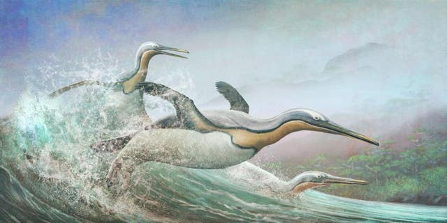 The giant penguins, like these Kumimanu, that lived in Aotearoa New Zealand around 60 million years ago bore a striking resemblance to some plotopterids.