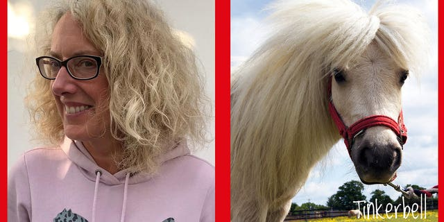 """positive news People are getting matched up with a """"lookalike"""" horse with its mane combed into a similar style, and many of the matches are brilliantly accurate."""