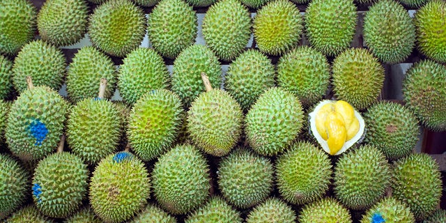 Stacked fruit and socalled Singaporean King of fruits Durian. Night shot. Fruit is quite tasting very strong and popular one for real Singaporean people. For foreigners mostly to strong smelling and tasting. One fruit is opened to see inner yellow pulp. Fruit is only available around Singapore and Maylasia.