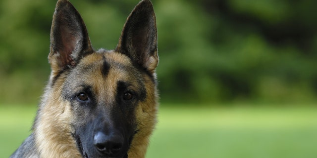 The dog is expected to make a full recovery, officials said. (iStock)