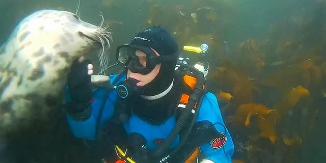 Westlake Legal Group seal-of-approva-530000-e1592224843245 British diver photobombed after getting underwater cuddle from grey seal fox-news/science/wild-nature/mammals fox-news/science/planet-earth/oceans fox news fnc/science fnc Chris Ciaccia article 8c1f7c8e-8664-5531-a14f-8dc577380bf0