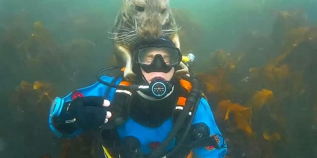 Westlake Legal Group seal-of-approva-530001-e1592224646342 British diver photobombed after getting underwater cuddle from grey seal fox-news/science/wild-nature/mammals fox-news/science/planet-earth/oceans fox news fnc/science fnc Chris Ciaccia article 8c1f7c8e-8664-5531-a14f-8dc577380bf0