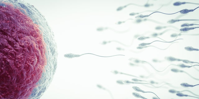 A new study has found that a woman's eggs are especially selective when choosing the most ideal sperm for fertilization.