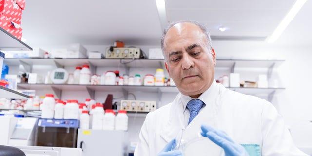 Sanjeev Krishna, professor of molecular parasitology and medicine at St George's, University of London, studies an assay. (Photo courtesy of St George's, University of London)