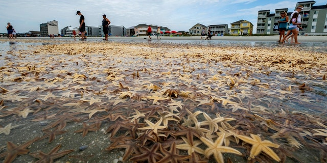People play with starfishes as thousands of them washed ashore during low tide on Garden City Beach, S.C., June 29.