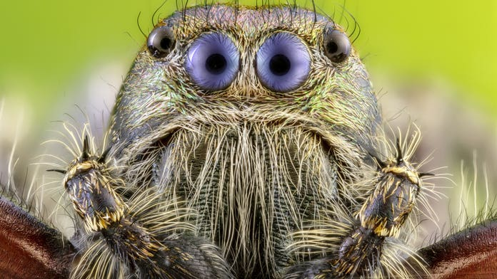 Tiny Spider Gets Big Close Up With Photographer S Camera Fox News