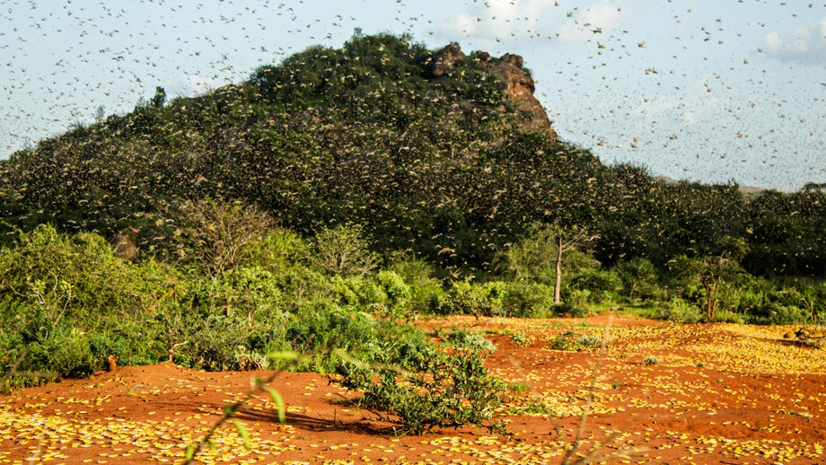 Vast locust swarms in East Africa put almost 5 million people at risk of hunger and famine: Experts
