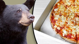 Bear leaves Ontario home hungry after breaking in to find pizza