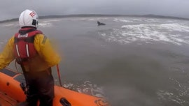Horse rescued by lifeboat crew in Ireland after bolting out a mile into sea