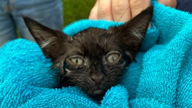 Long Island police rescue kitten from storm drain