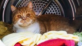 Cat survives 12 hot minutes in active washing machine