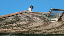Family shocked to return home to find dog stuck on roof, being rescued by emergency crew