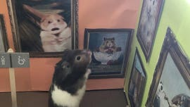 Woman recreates sets from famous movies for her hamster during lockdown
