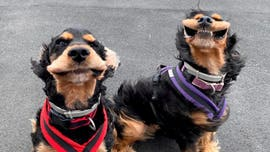 Viral pictures show two dogs with their mouths flapping because of a strong wind gust