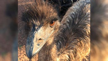 'Something from outer space': Emu on the loose startles suburban NJ residents