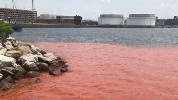 'Plume' spreads in Baltimore's Inner Harbor; water main break to blame