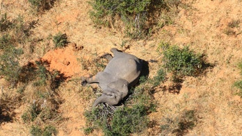 Mystery of Botswana's mass elephant die-off may be solved