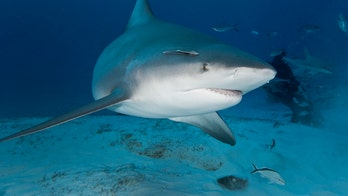 Shark attacked snorkeler in Florida Keys 'almost immediately' after he entered the water, police say
