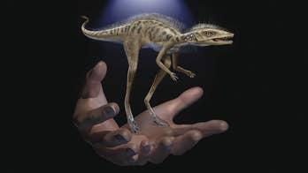 Scientists discover diminutive dinosaur ancestor: a 4-inch 'tiny bug slayer'