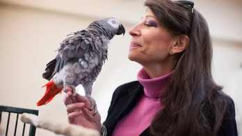This parrot beat 21 Harvard students in a classic memory game