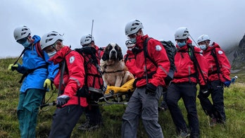 'Massive' St. Bernard rescued from England's highest mountain