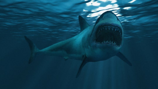 Shark 'grabbed' 10-year-old boy from boat in Tasmania: report