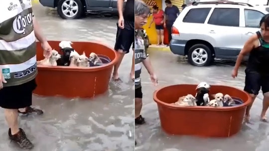 Couple in Mexico who lost 'everything' in Hanna flooding rescue their puppies from floodwaters