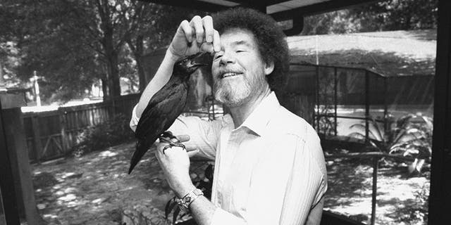 TV painting instructor/artist Bob Ross hand-feeding his pet crow as it perches on his hand at home.