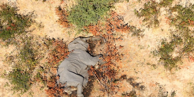 """The mass elephant die-off has been described as """"catastrophic."""""""