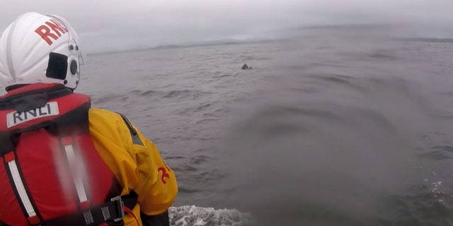 The RNLI said it took crew members nearly an hour to entice the animal back to shore.