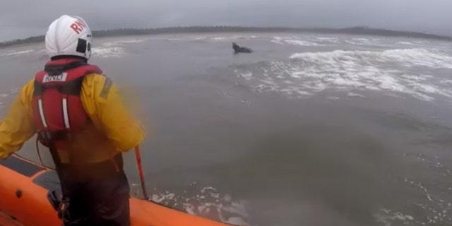 A lifeboat crew in Ireland helped rescue a horse that had bolted over a mile out into the Atlantic Ocean on Monday.