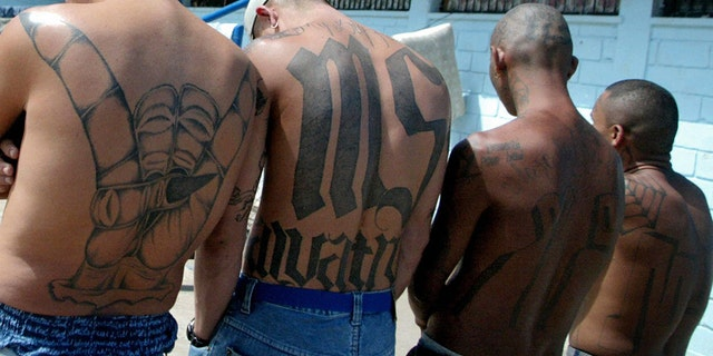 "Four unidentified members of the Mara Salvatrucha ""MS-13"" show their tattoos in the unit where they are kept imprisoned in the National Penitentiary in Tamara."