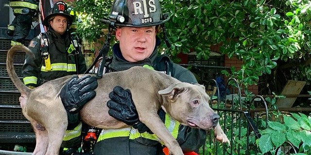 Six dogs were rescued from a burning home during the intense heat wave in Washington D.C. on Tuesday.