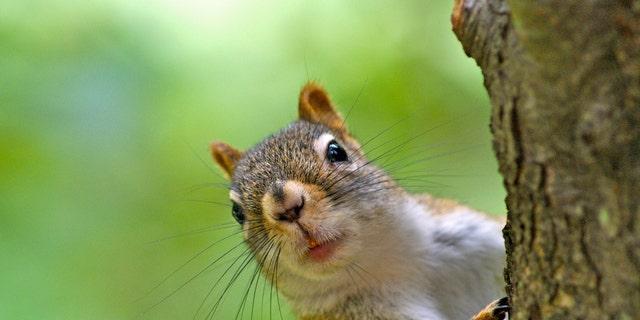 Squirrel tests positive for plague in Colorado