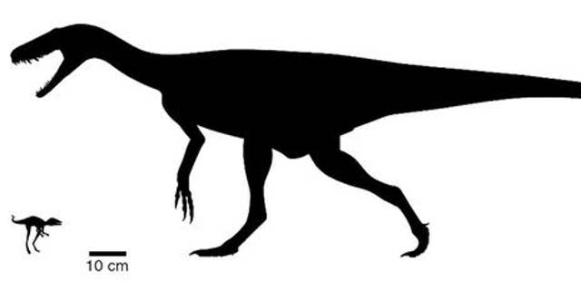 Body size comparison between the newly discovered Kongonaphon kely (left) and one of the earliest dinosaurs, Herrerasaurus.  (Photo credit: Phylopic.org by Scott Hartman (CC BY 3.0) Frank Ippolito, AMNH)