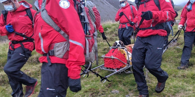 Daisy, a St Bernard, collapsed on Scafell Pike in England and needed to be rescued on Friday.