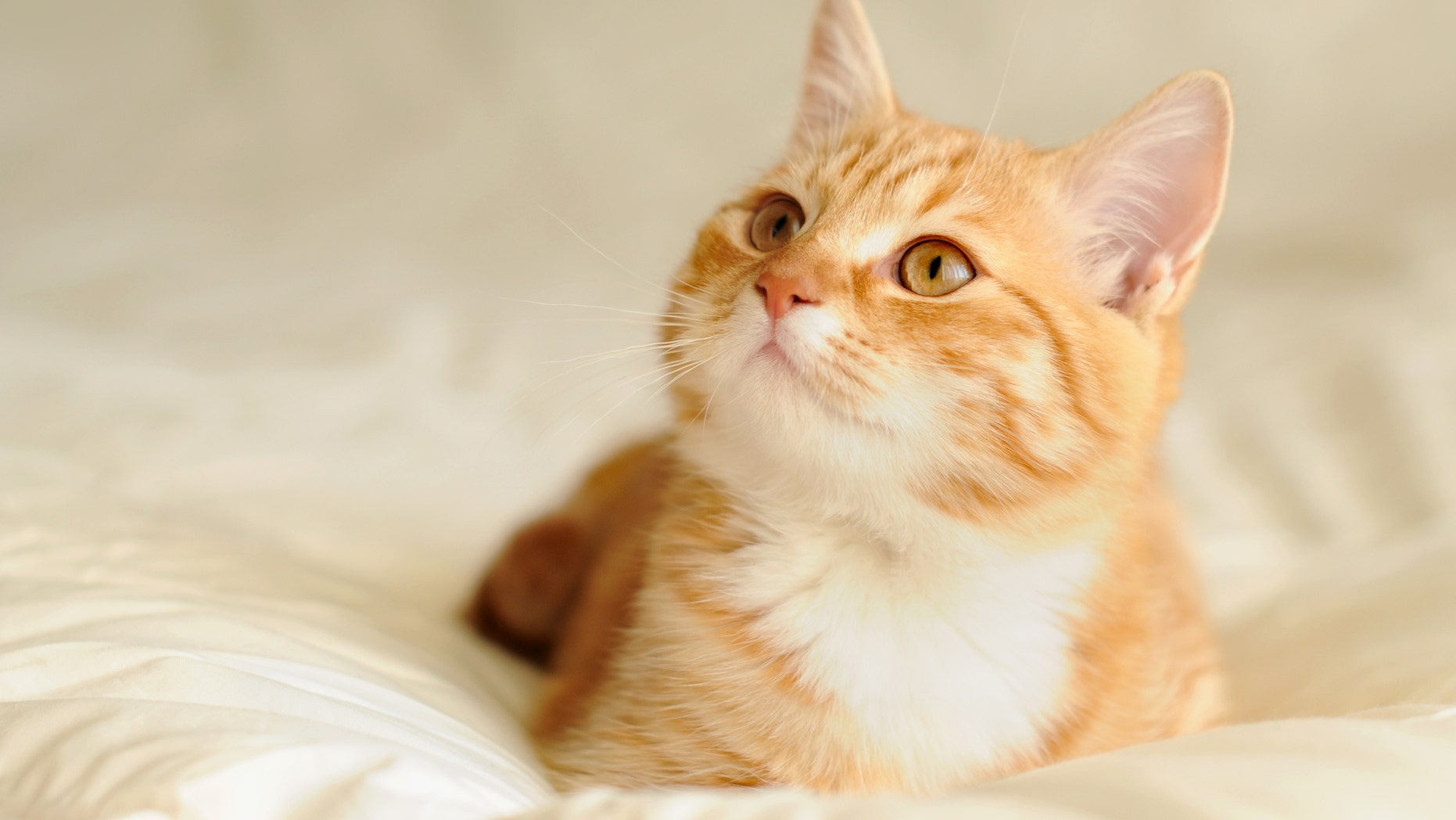 Cats Recover From Coronavirus Faster