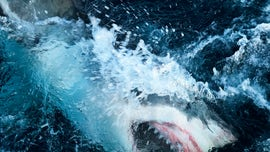 Record-breaking shark breach captured on camera