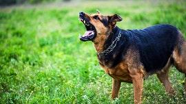 Cases of dog biting children 'surge' during COVID-19, study shows