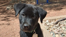 Southwest Airlines flight attendant escorts rescue puppy 2,000 miles to new home