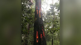 Lightning strike in South Carolina leaves tree with burning 'claw marks'