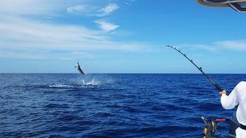 Texas fishermen win tournament with 737-pound marlin