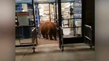 Bear wanders into California grocery store, leaves with bag of tortilla chips, video shows
