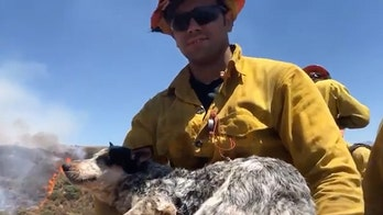 Lost dog rescued from Apple Fire by firefighters; blaze now 30% contained