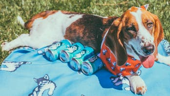 Brewery sending adoptable dogs to deliver beer to customers on National Dog Day