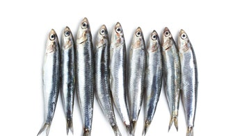 Plastics found in samples of popularly consumed seafood, study finds