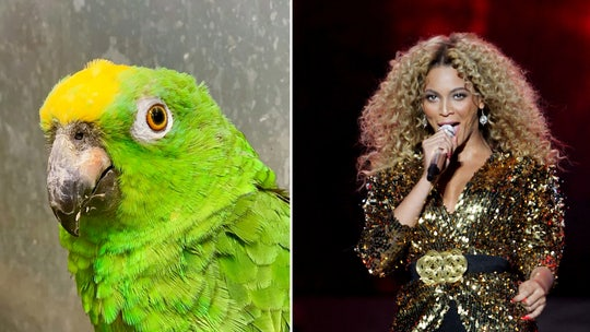 Singing parrot shocks wildlife park guests, Facebook users with Beyoncé rendition