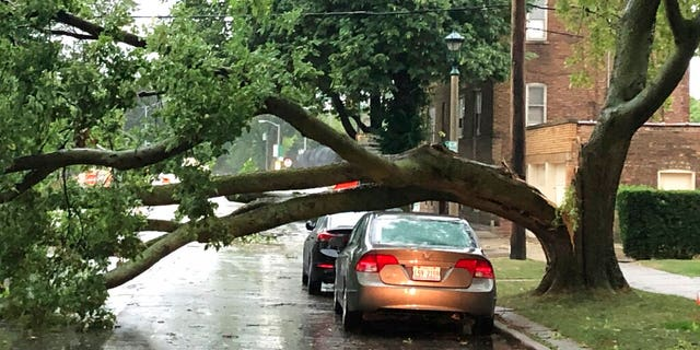 Part of a tree that had split at the trunk lies on a road in Oak Park, Ill., while also appearing not to have landed on a car parked on the road, after a severe storm moved through the Chicago area Monday, Aug. 10, 2020.