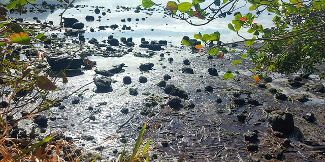 This photo taken and provided by Sophie Seneque, shows debris in Riviere des Creoles, Mauritius, Sunday Aug. 9, 2020, after it leaked from the MV Wakashio.
